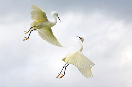 national-geographic-birds