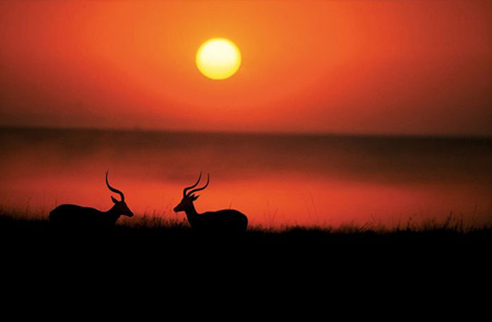 national-geographic-deer