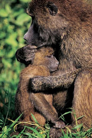 national-geographic-hug